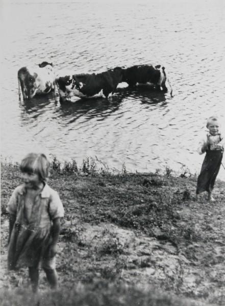 Irena Blühová, Pastierik kráv